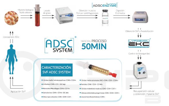 Celulas Madre, medicina regenerativa y traslacional