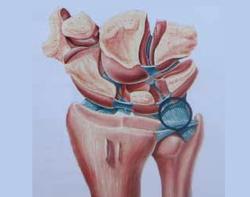 fibrocartilago triangular